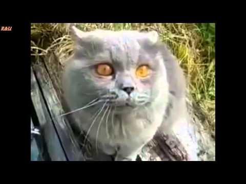 Cat learning to speak